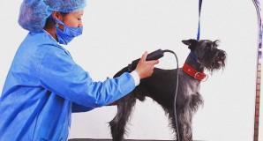 Estética para mascotas